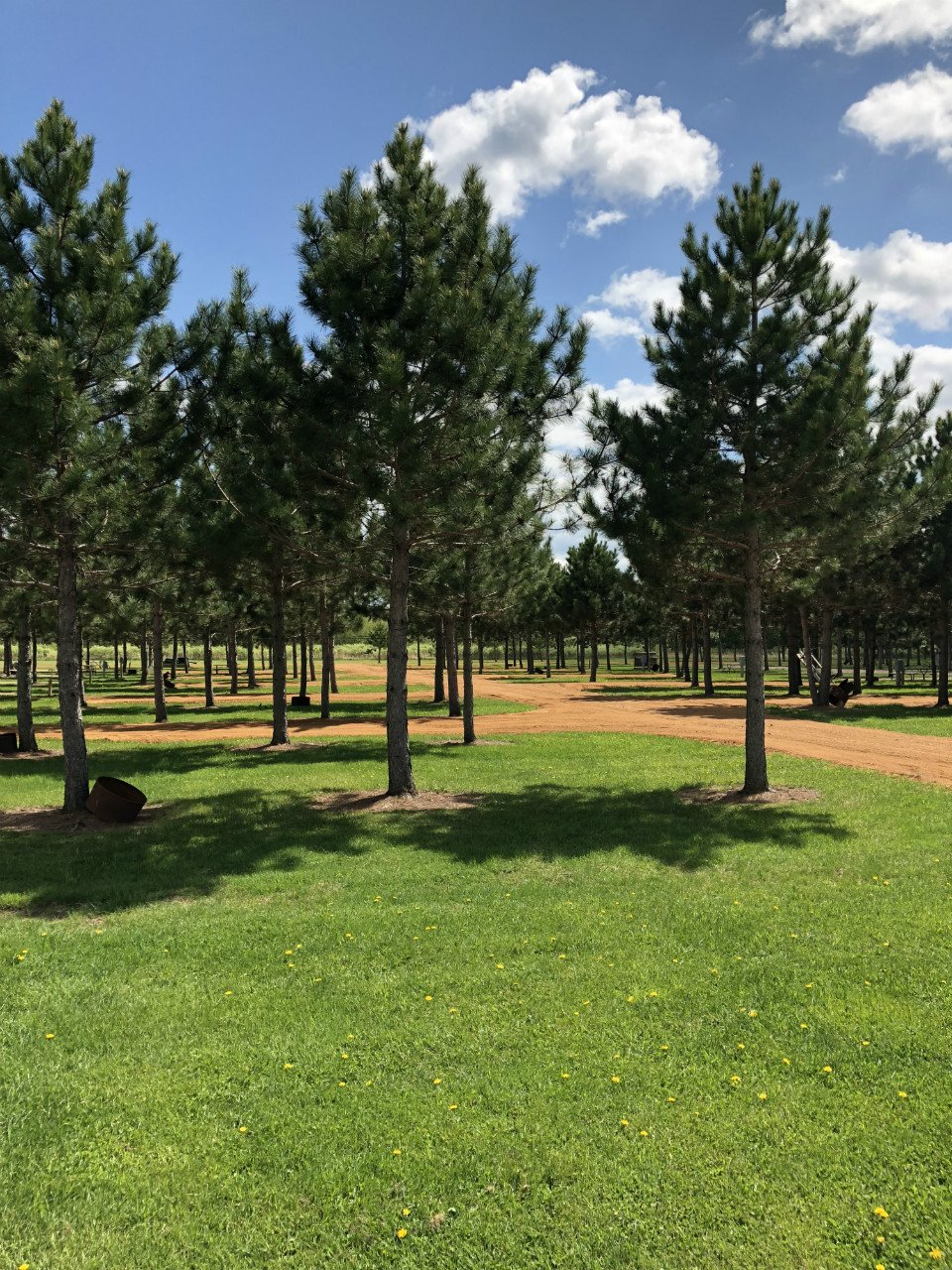 GNC-trees-2018